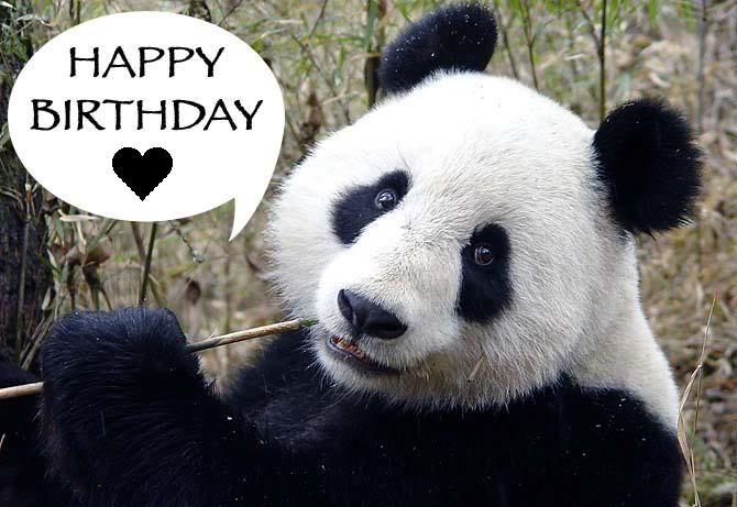 Happy panda birthday birthday children bookmarktalkfo Choice Image